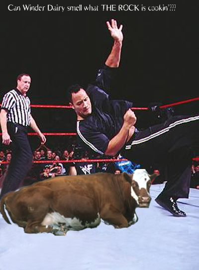 The Rock Beats Down a Cow