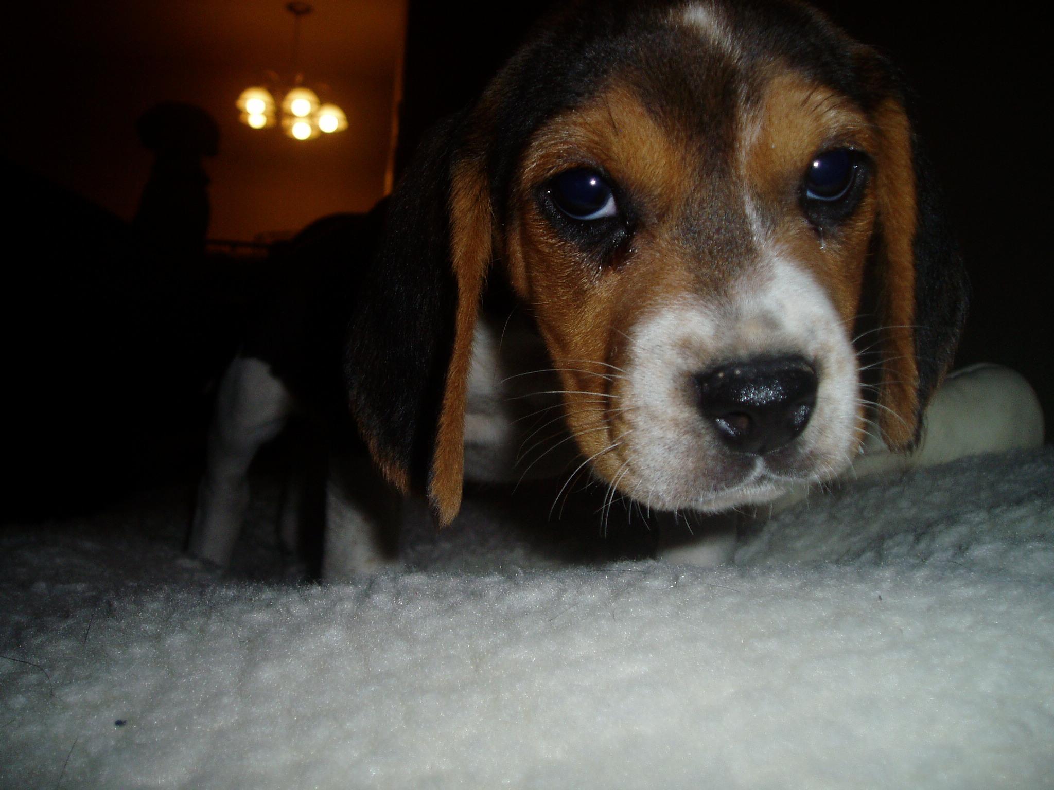Meet Annabelle